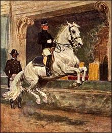 Lipzzaner stallion